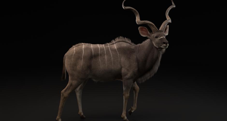 projet école animation 3d et vfx : Greater Kudu